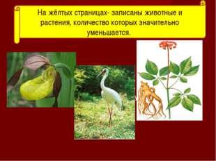 амурский тигр На жёлтых страницах- записаны животные и растения, количество