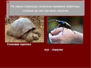 - Слоновая черепаха жук - геркулес На серых страницах записаны названия живот
