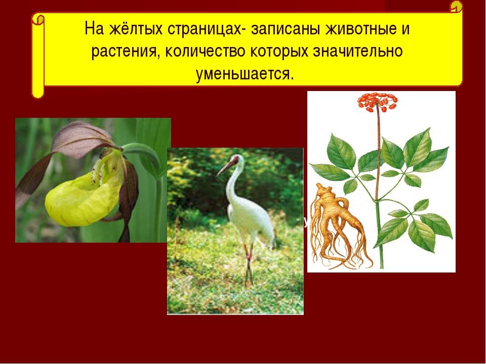 амурский тигр На жёлтых страницах- записаны животные и растения, количество...