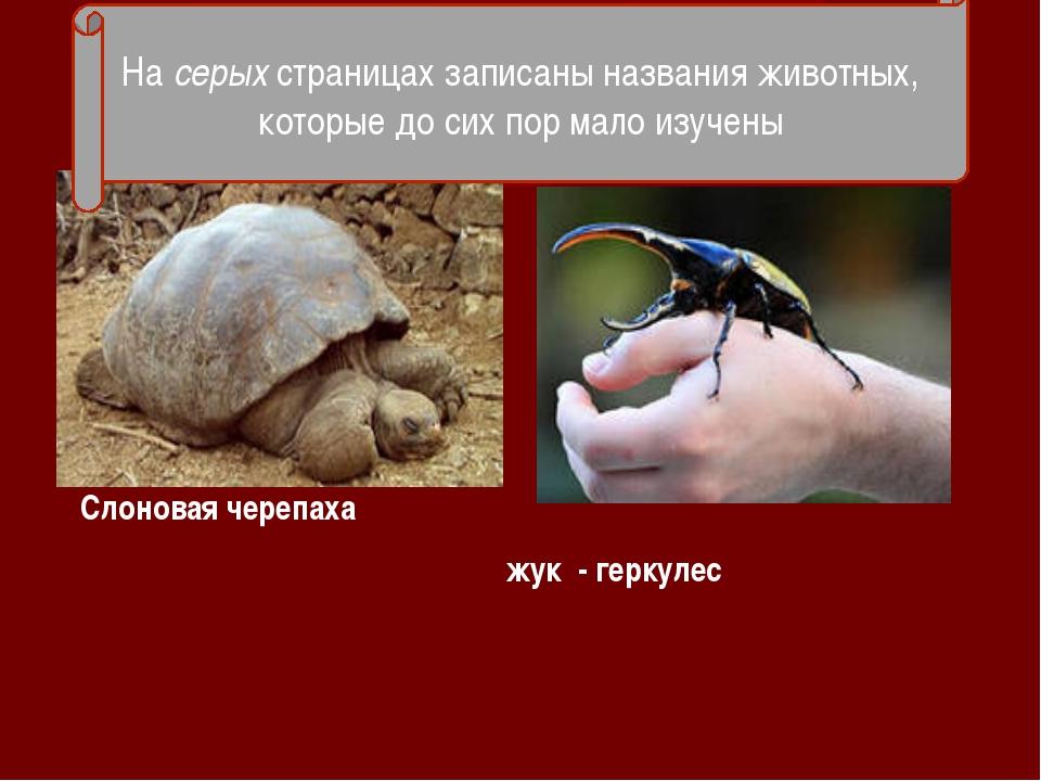 - Слоновая черепаха жук - геркулес На серых страницах записаны названия живот...