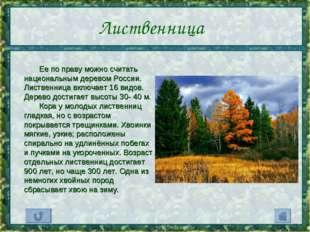 Лиственница Ее по праву можно считать национальным деревом России. Лиственниц