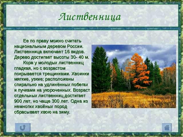 Лиственница Ее по праву можно считать национальным деревом России. Лиственниц...