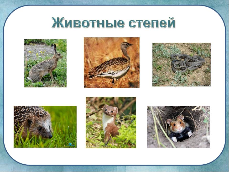 чехлы растения и животные степи с картинками защитит его
