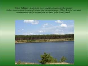 Озеро Лебяжье - излюбленное место отдыха местных жителей и горожан. Глубина