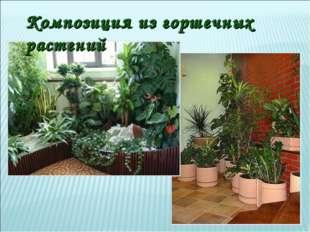 Композиция из горшечных растений