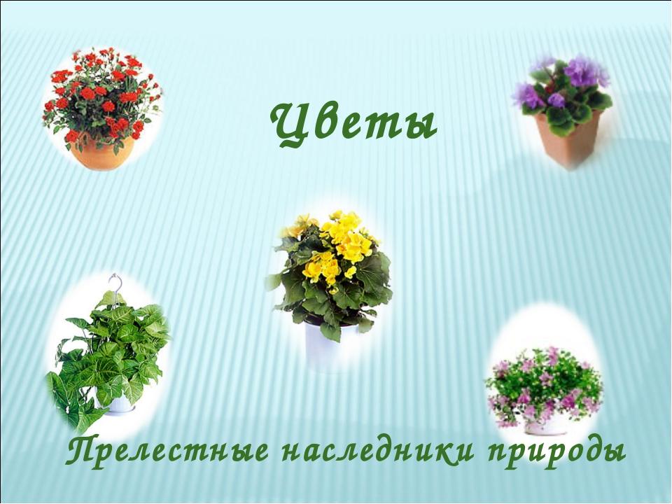 Цветы Прелестные наследники природы