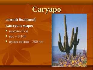 Сагуаро самый большой кактус в мире: высота-15 м вес – 6-10т время жизни – 30