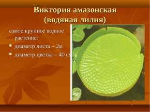 Виктория амазонская (водяная лилия) самое крупное водное растение: диаметр ли