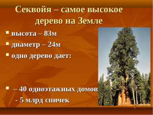 Секвойя – самое высокое дерево на Земле высота – 83м диаметр – 24м одно дерев