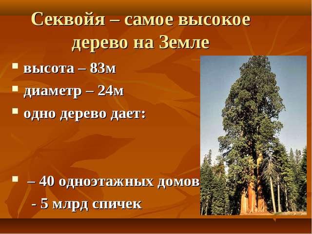 Секвойя – самое высокое дерево на Земле высота – 83м диаметр – 24м одно дерев...