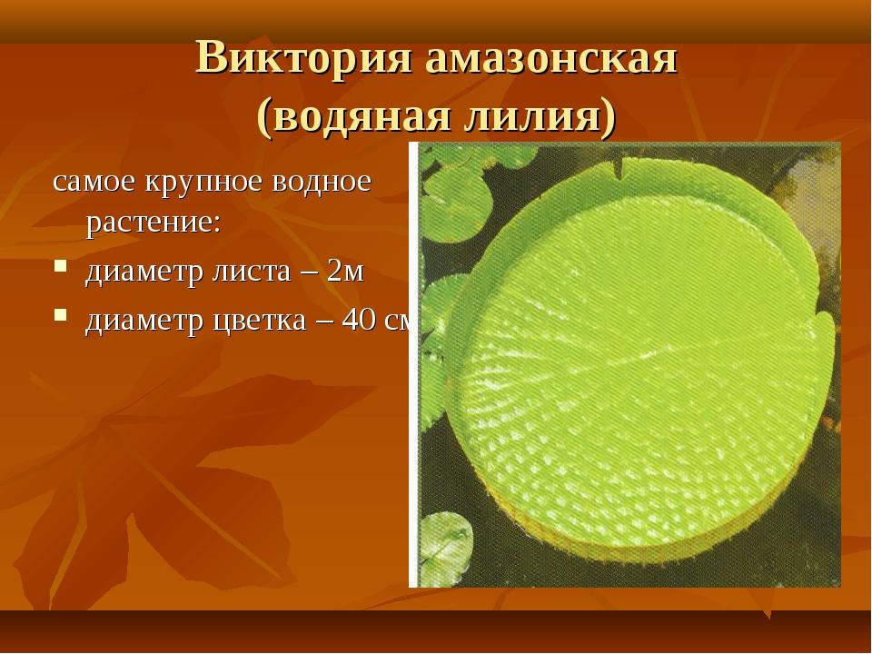 Виктория амазонская (водяная лилия) самое крупное водное растение: диаметр ли...