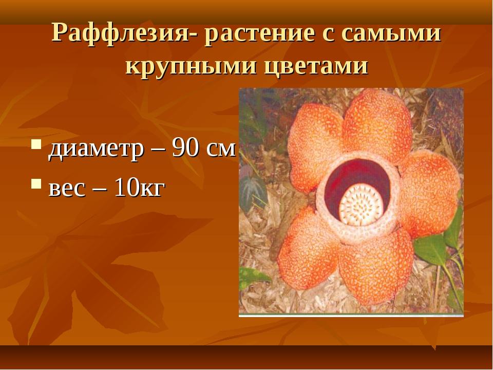 Раффлезия- растение с самыми крупными цветами диаметр – 90 см вес – 10кг