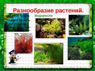 Разнообразие растений. Водоросли