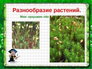 Разнообразие растений. Мхи: кукушкин лён