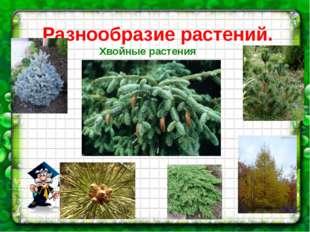 Разнообразие растений. Хвойные растения