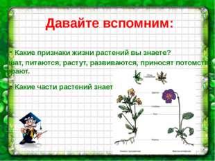 Давайте вспомним: Какие признаки жизни растений вы знаете? Какие части растен