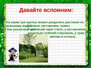 Давайте вспомним: На какие три группы можно разделить растения по внешнему ви