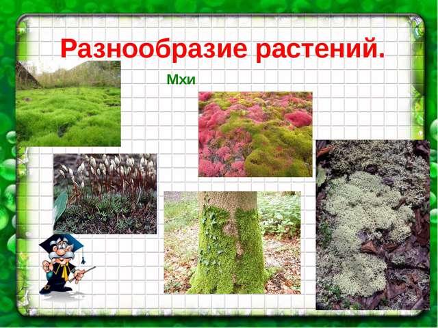 Разнообразие растений. Мхи