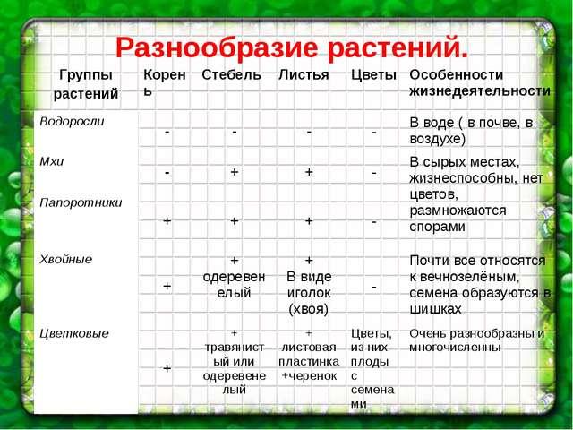 Разнообразие растений. Группы растений Корень Стебель Листья Цветы Особенност...