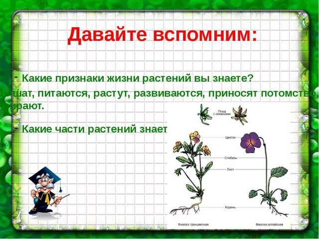 Давайте вспомним: Какие признаки жизни растений вы знаете? Какие части растен...