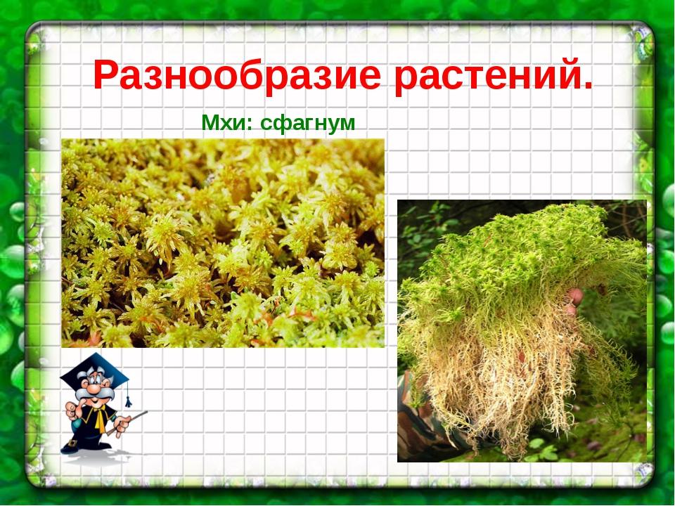 Разнообразие растений. Мхи: сфагнум