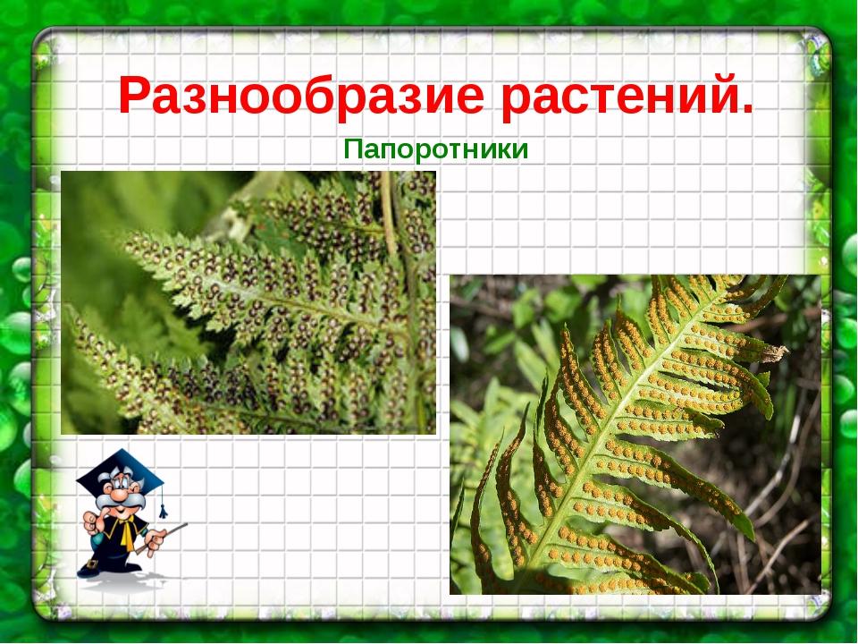 Разнообразие растений. Папоротники