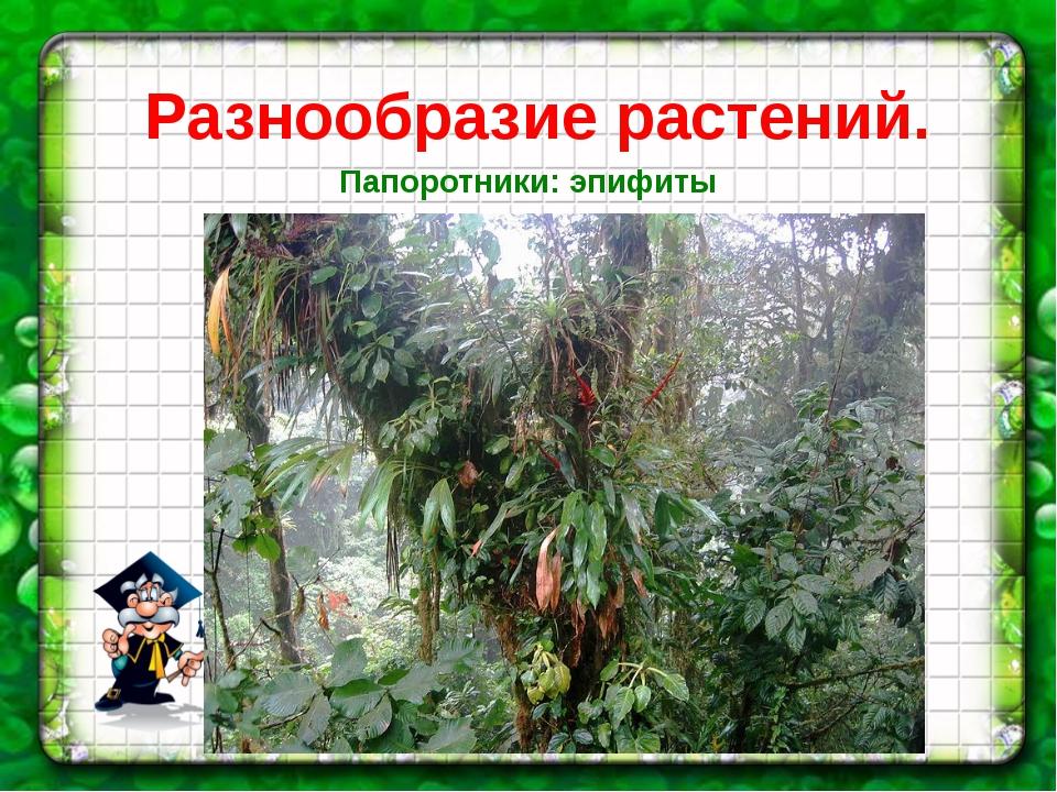 Разнообразие растений. Папоротники: эпифиты