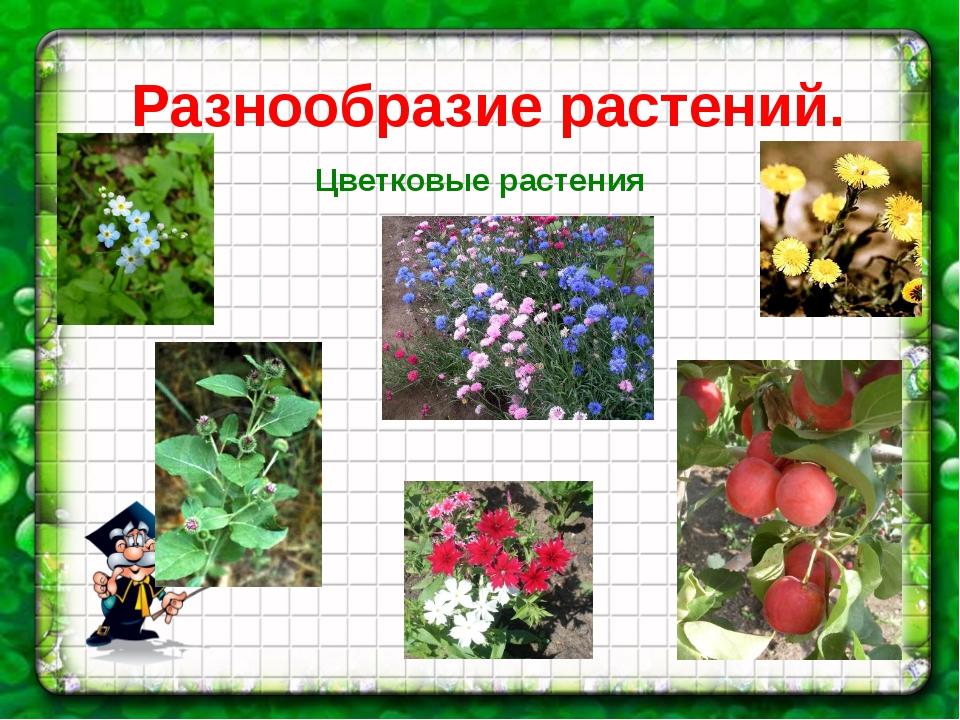 Разнообразие растений. Цветковые растения