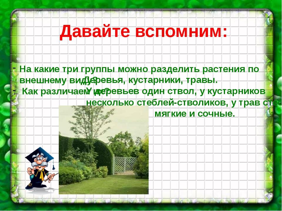 Давайте вспомним: На какие три группы можно разделить растения по внешнему ви...