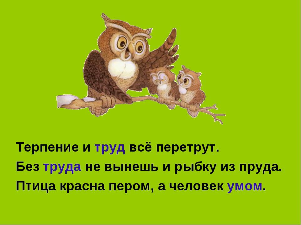 Терпение и труд всё перетрут. Без труда не вынешь и рыбку из пруда. Птица кр...