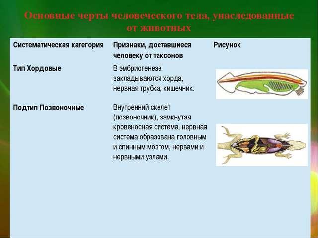 Основные черты человеческого тела, унаследованные от животных Систематическая...