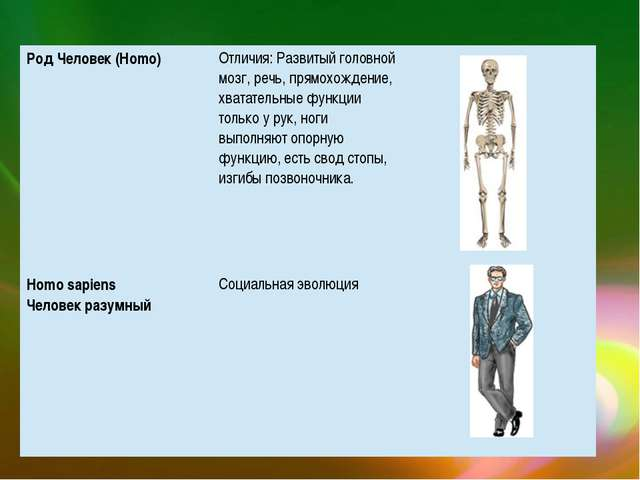 Род Человек (Homo) Отличия: Развитый головной мозг, речь,прямохождение, хвата...