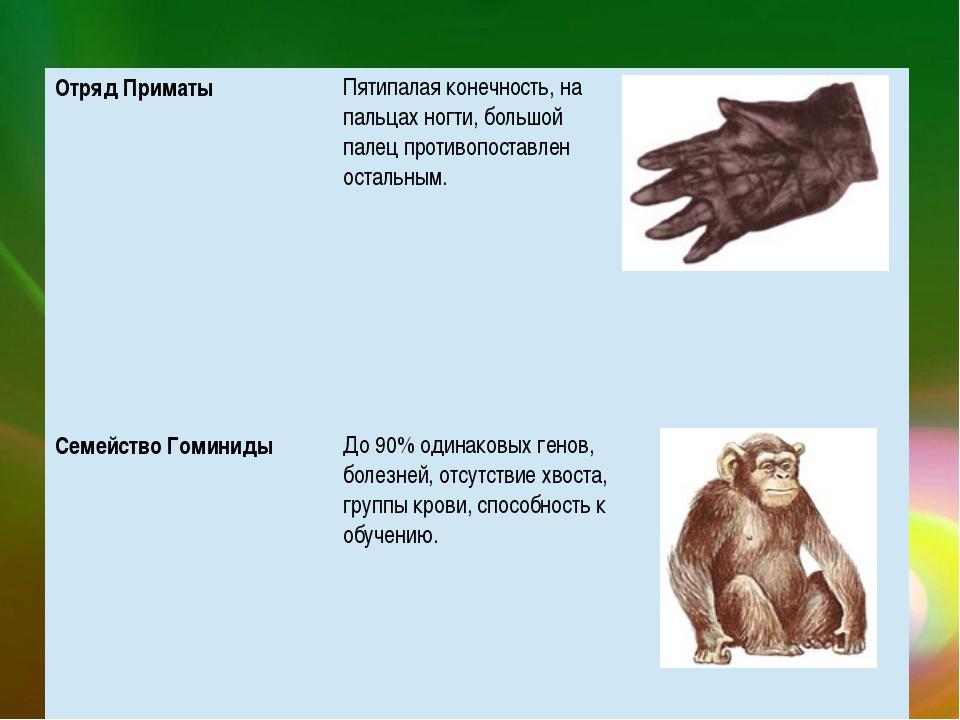 Отряд Приматы Пятипалая конечность, на пальцах ногти, большой палец противопо...