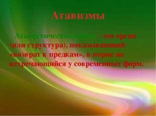 Атавизмы Атавистический орган – это орган (или структура), показывающий «возв
