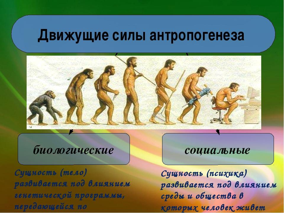 Движущие силы антропогенеза биологические социальные Сущность (тело) развивае...