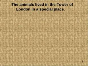 * The animals lived in the Tower of London in a special place.