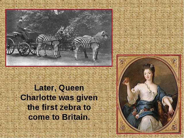 * 	 Later, Queen Charlotte was given the first zebra to come to Britain.