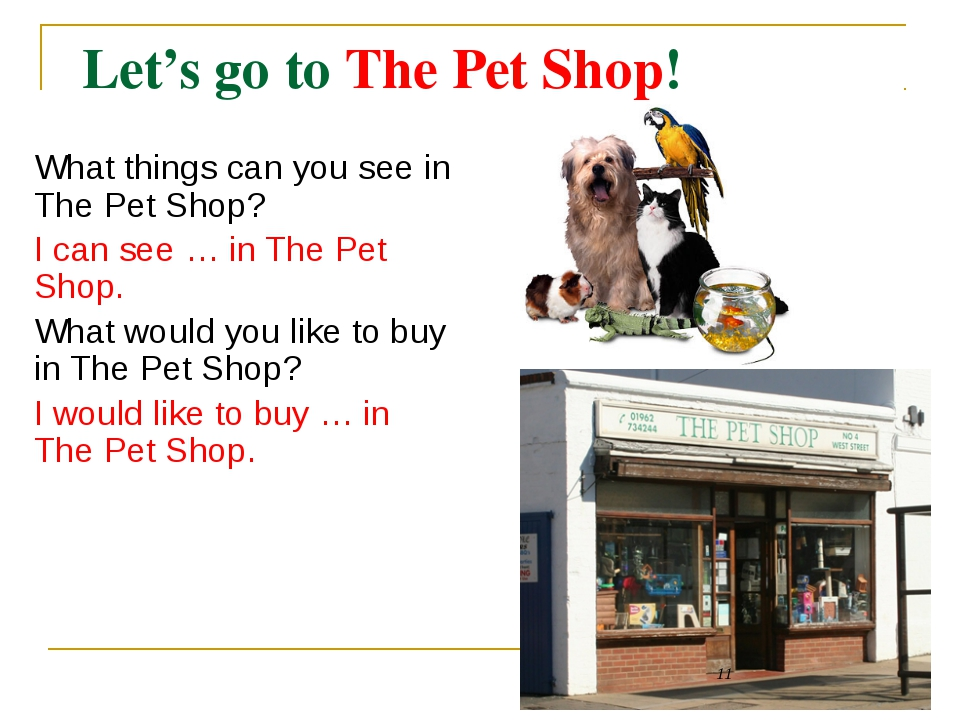 Let's go to The Pet Shop!