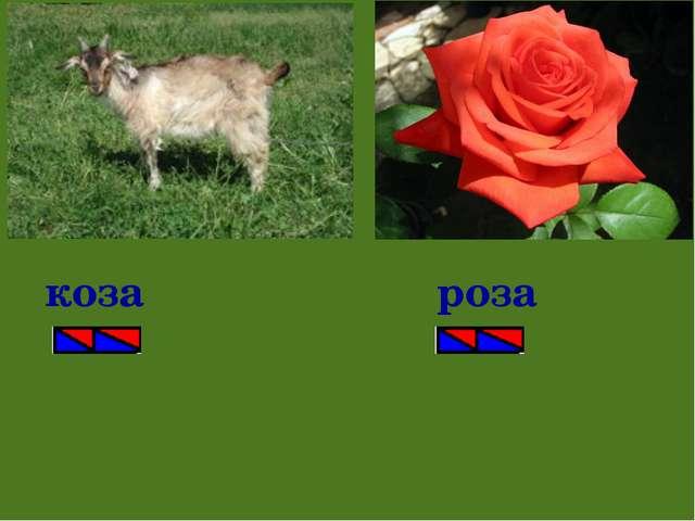 коза роза