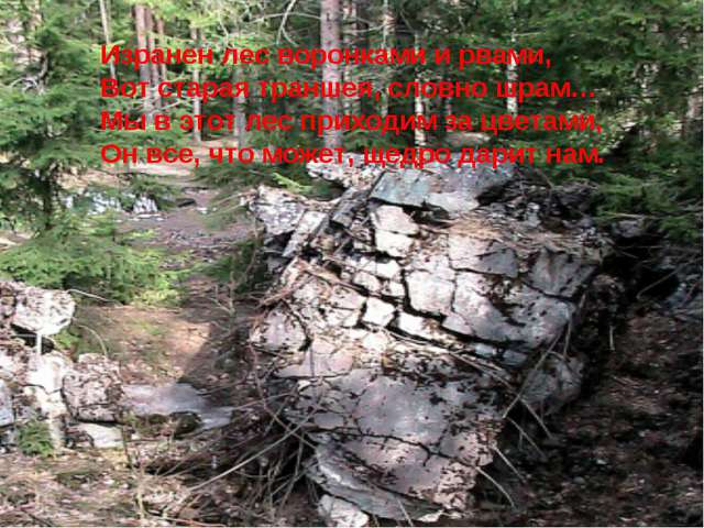 Изранен лес воронками и рвами, Вот старая траншея, словно шрам… Мы в этот лес...