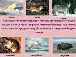 Животные тоже приспособились к тяжелым условиям: кто-то зимой впадает в спячк