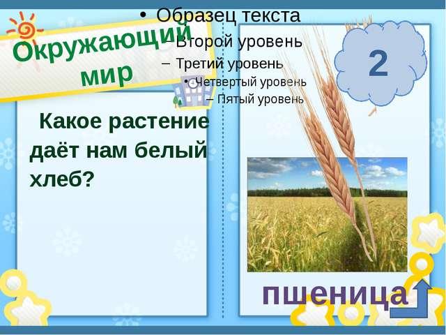 Окружающий мир п. Солнечный Сафронова И. А. Какое растение даёт нам белый хле...