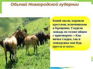 Обычай Новгородской губернии Коней мыли, кормили крестами, испеченными в Крещ
