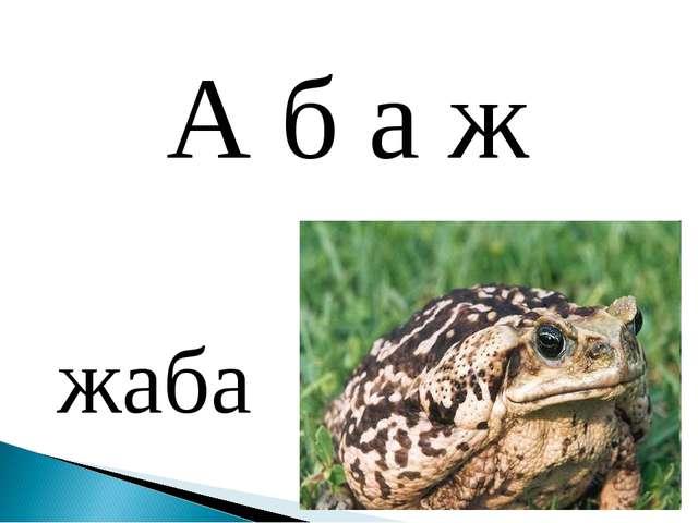 жаба А б а ж