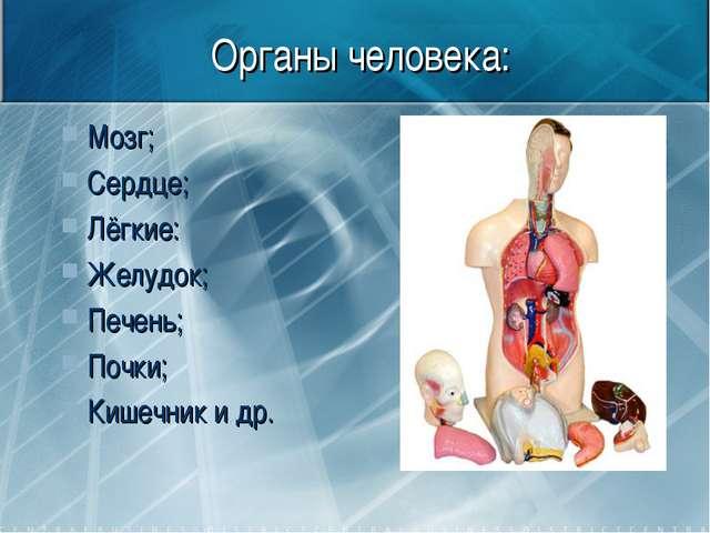 Органы человека: Мозг; Сердце; Лёгкие: Желудок; Печень; Почки; Кишечник и др.