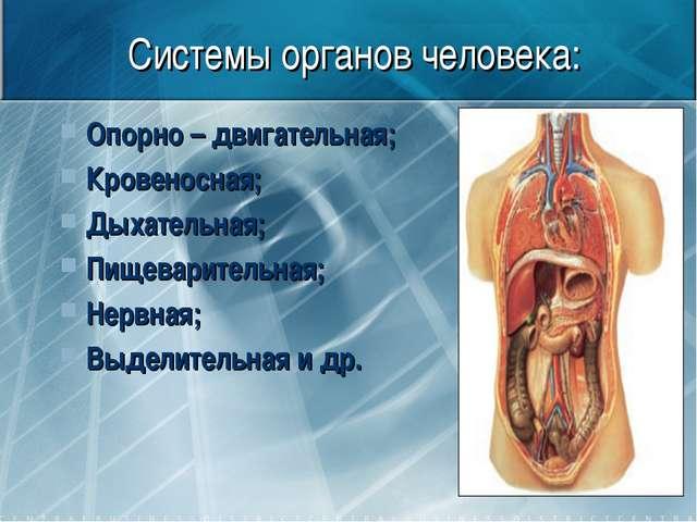Системы органов человека: Опорно – двигательная; Кровеносная; Дыхательная; Пи...