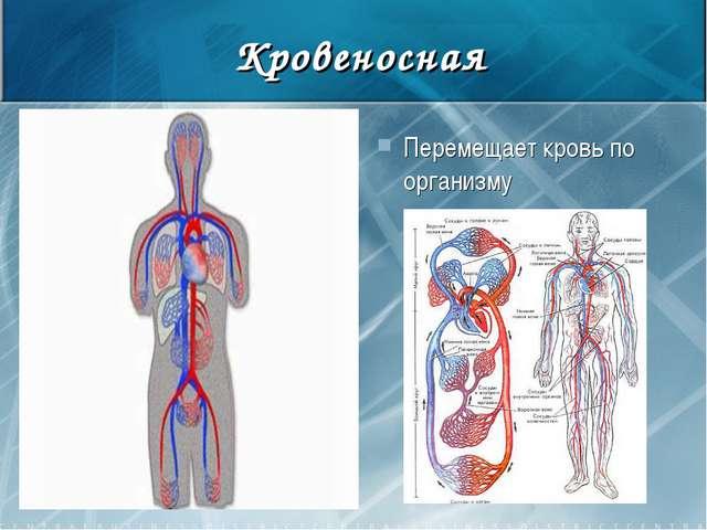 Кровеносная Перемещает кровь по организму