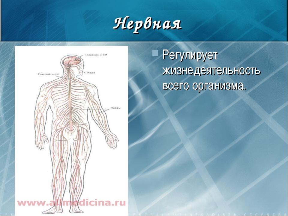 Нервная Регулирует жизнедеятельность всего организма.