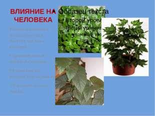 . ВЛИЯНИЕ НА ЧЕЛОВЕКА Растения питаются углекислым газом, выделяя при этом ки