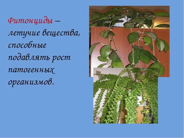 Фитонциды – летучие вещества, способные подавлять рост патогенных организмов.
